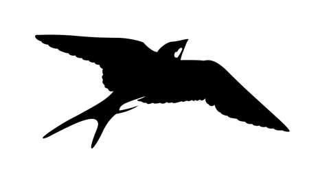 golondrinas: silueta de la golondrina sobre fondo blanco