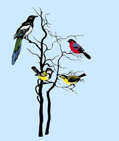 pajaro dibujo: silueta de las aves en árbol