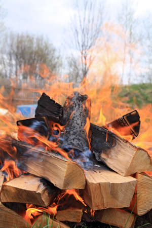scorching: burninging firewood in campfires