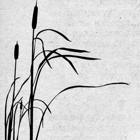 bulrush:  grunge background Illustration