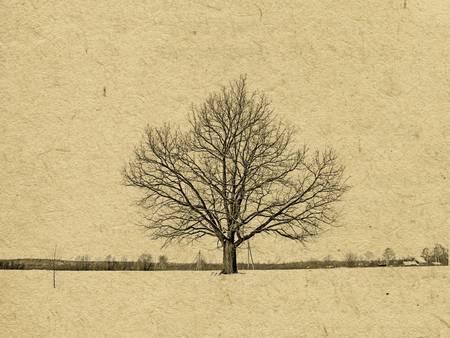 oak trees: grunge background