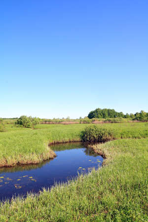 small river on green field photo