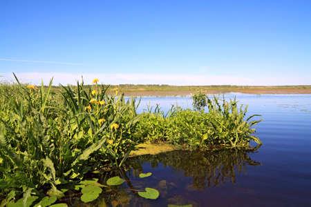 yellow flowerses on big lake photo