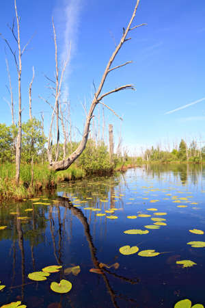 green water lilies on small lake Stock Photo - 9702904