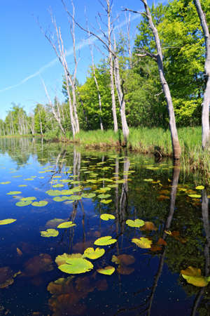 green water lilies on small lake Stock Photo - 9867302