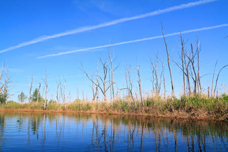dry tree on coast river photo
