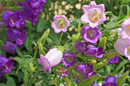 amongst: summer flowerses amongst green herb
