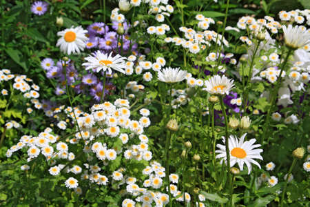 summer flowerses on town lawn photo