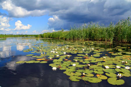 water lilies on small lake photo