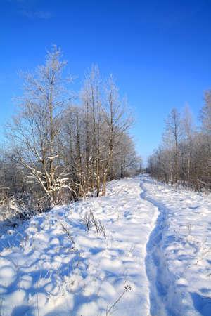 wet lane in winter park  photo