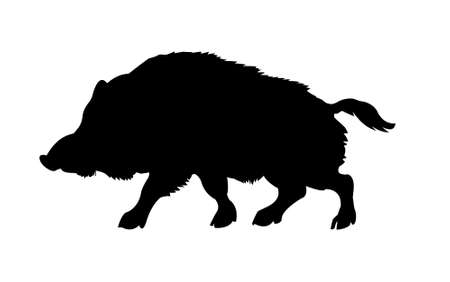 silhouette of the wild  boar isolated on white background photo