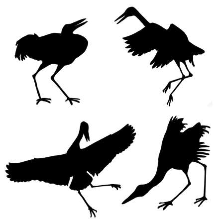 silhouette of the cranes isolated on white background photo