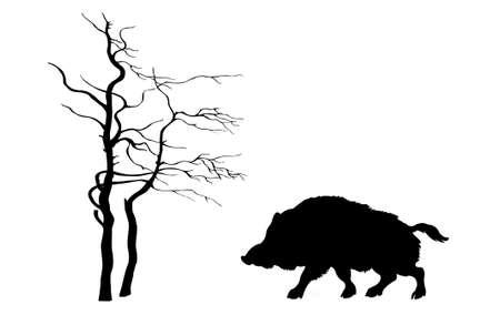 sanglier: sanglier sauvage silhouette sur fond blanc Banque d'images