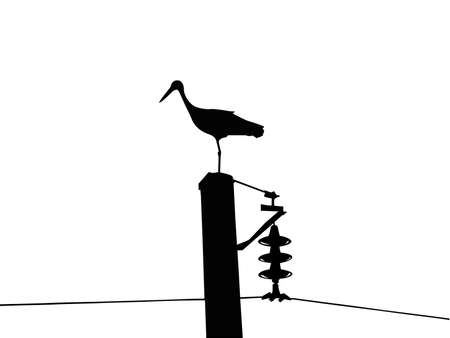 silhouette of the crane isolated on white background      photo