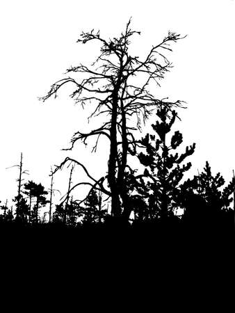 perish:  silhouette old tree isolated on white background