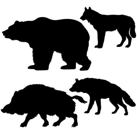 wild nature wood:  silhouettes of the wild boar, bear, wolf, hyena on white background