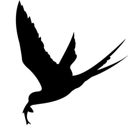 sea bird:  silhouette of the sea bird on white background