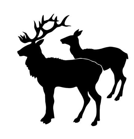 dignified:  illustration of the deers on white background