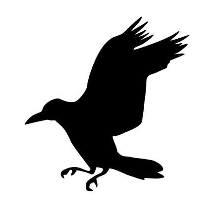 silhouette of the  raven isolated on white background photo