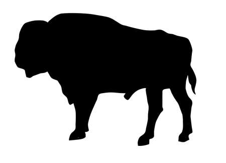 silhouette of the oxen on white background photo