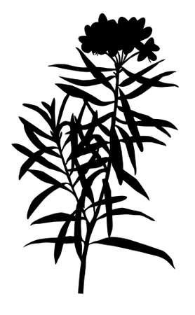 marsh plant: illustrazione della pianta palustre su sfondo bianco Archivio Fotografico