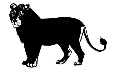 quick drawing:  illustration lion on white background Stock Photo