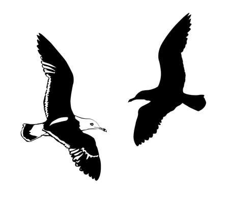 silhouettes flying birds on white background photo