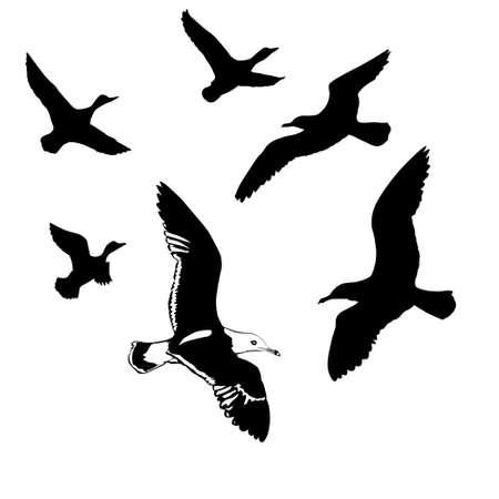 albatross: silhouettes flying birds on white background