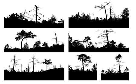 silhouettes tree on white background photo