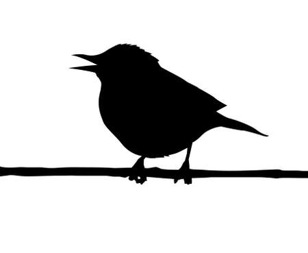 silhouette of the bird on branch Stock Photo - 10955282
