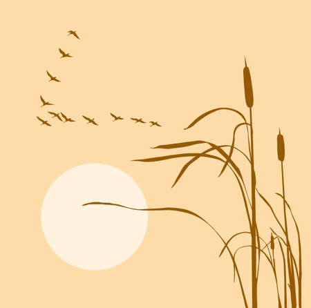 flock of birds:  drawing flock geese on bulrush