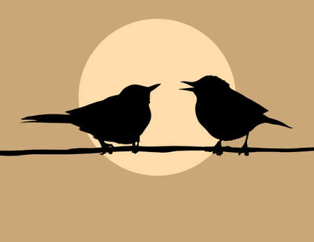 silhouette two birds on background sun photo
