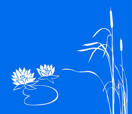 water lily and reed on  blue background. vector photo
