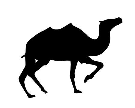 hunch: silhouette camel on white background
