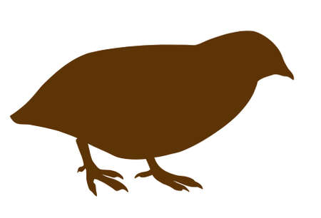 silhouette of the quail on white background photo