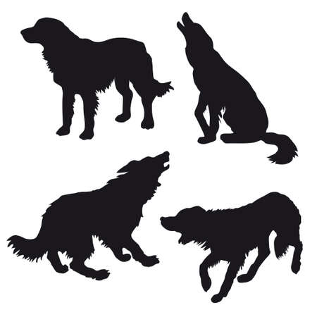shaggy dog: silhouette of the dog on white background
