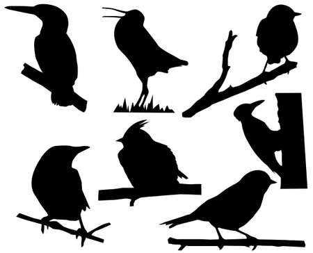 thrush:  silhouette of the small birds on branch tree