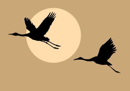 crane bird: silhouettes flying cranes on background sun