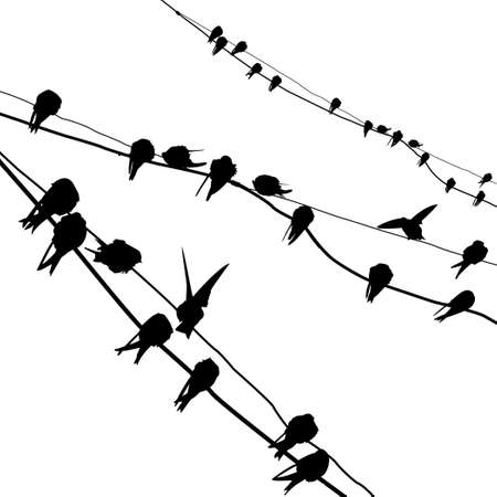 migrating animal: silhouette migrating swallow reposing on electric wire Stock Photo