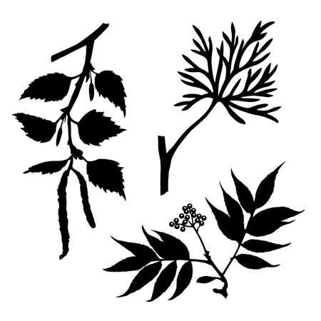 siluetas: silhouettes of the timber plants on white background