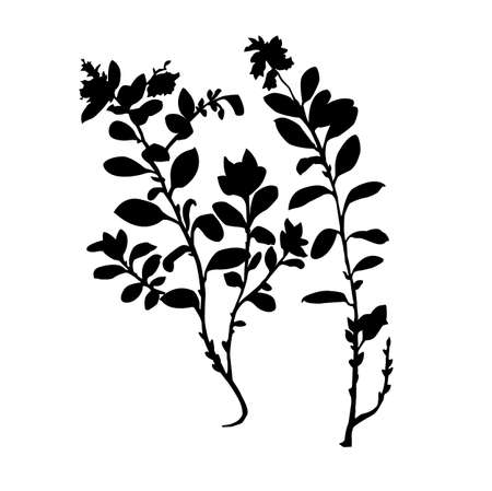 cowberry: silhouette of the plant of the cowberry on white background