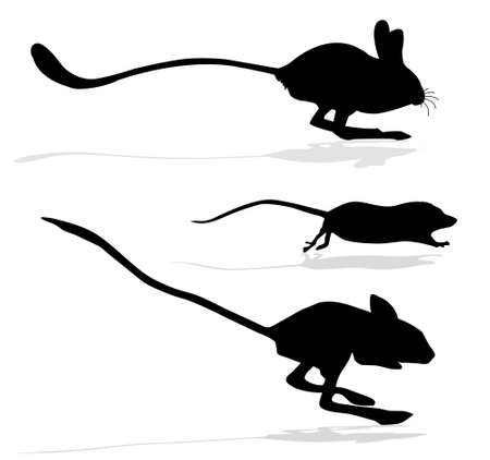 silhouettes of the jerboa and rats on white background photo