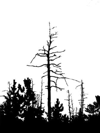 perish: silhouette dry tree isolated on white background