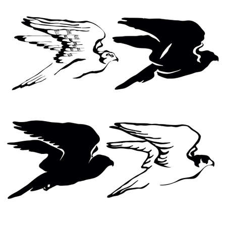 drawing of the hawk on white background photo