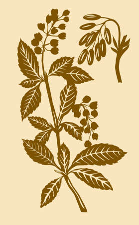 flowerses:  illustration of the plant of the barberry
