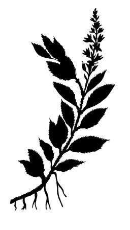 silhouette field plant on white background photo