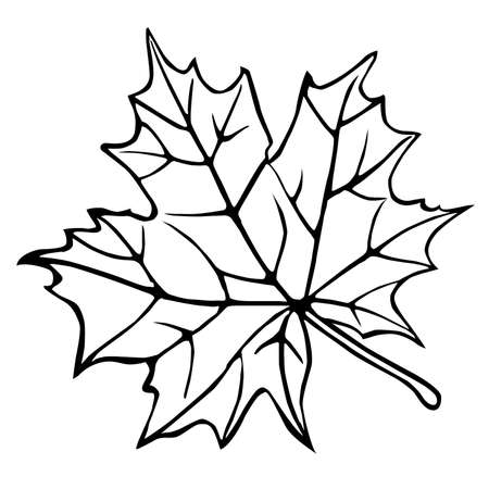 maples: silhouette of the maple leaf on white background