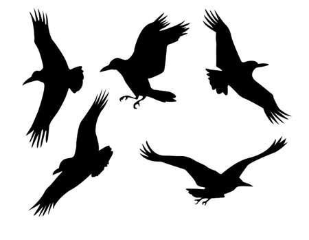 tatuaje de aves: silueta de un cuervo grupo aislado en el fondo blanco Foto de archivo