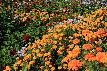 flowerses on flowerbed near rural building photo