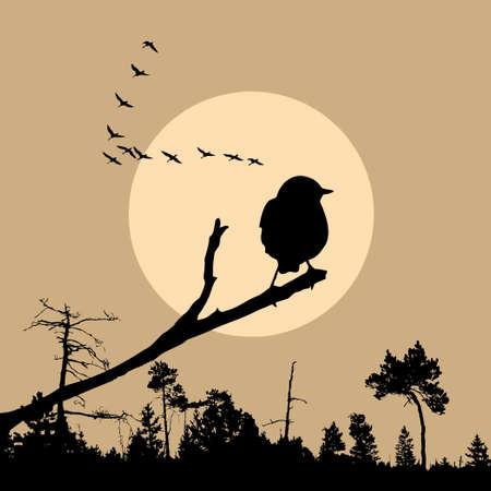 illustration of the bird on branch illustration
